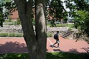 Ohio Buckeye, Tree Tour, Mapp Athens, College Green