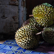 Ripe durian fruits (Durio) from the forest sit on the floor of a village house, Desa Sarahung, Central Kalimantan, Borneo, Indonesia