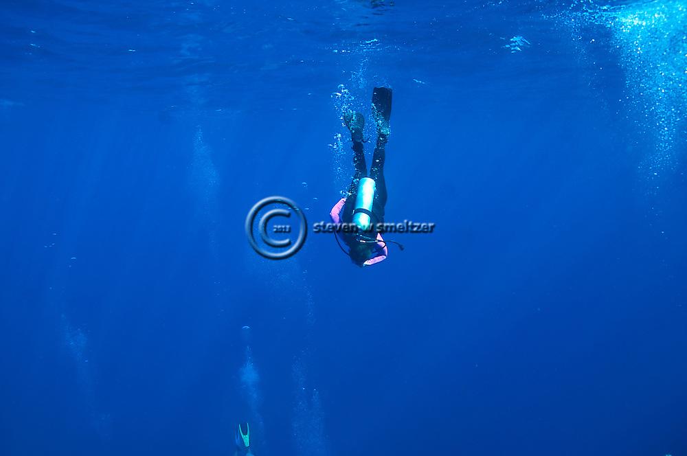 Diver on Tarpon Alley, Grand Cayman