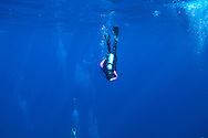 Diver on Tarpon Alley, Grand Cayman