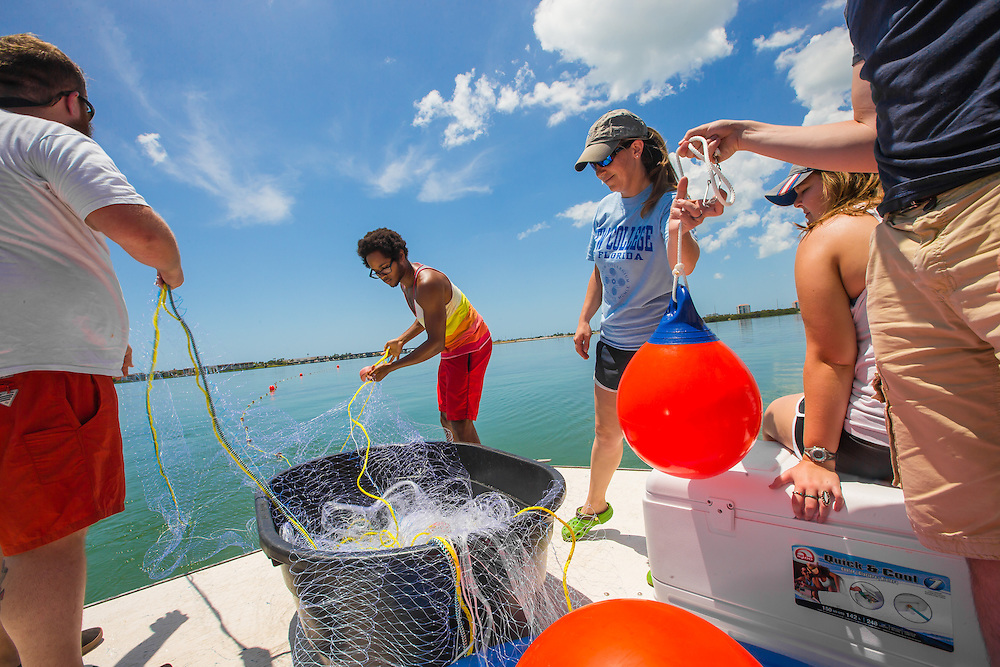 ST. PETERSBURG, FL -- May 12, 2015 -- New College of Florida students catch and release sharks for tagging, education, and research while on a boat off the coast of St. Petersburg, Florida. (PHOTO / CHIP LITHERLAND)