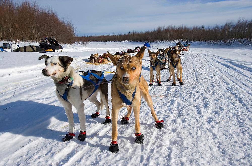 USA, Alaska, Nikolai, Sled dog teams on trail 20 miles east of Nikolai checkpoint on winter afternoon during 2005 Iditarod sled dog race