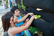 School Children learn about and tend the vertical garden at the Downtown Value School, a charter school in downtown Los Angeles. The vertical garden is provided by Woolly Pocket and is part of their Woolly School Garden program.  The school also has a flower and produce garden that goes around the school grounds, a small greenhouse and a worm compost bin that students collect for after each meal. Los Angeles, California, USA