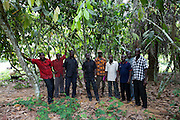 A group of cocoa farmers in Kromameng, eastern Ghana.