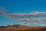 Bosque del Apache Jan 2012