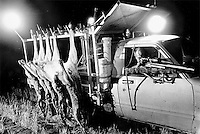 'Kangaroo Harvesting'..A shooters spotlight is pointed at a kangaroo from the front seat of the specially modified roo shooters truck. Animals hang on the sides of the truck before being gutted and transferred to the inside of the truck.