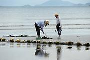 Cockle farmers on the popular tourist beach of Pui O beach, Lantau Island, Hong Kong..13.07.2011.©Jayne Russell