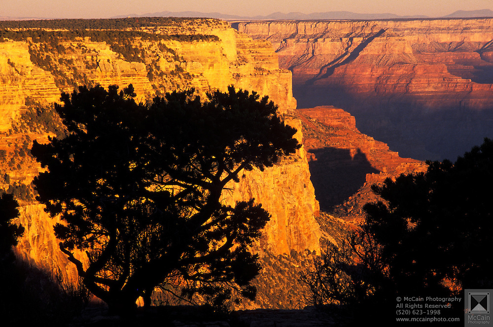 Sunrise, silhouette of pine tree, Yaki Point, Grand Canyon National. Park, Arizona ..Subject photograph(s) are copyright Edward McCain. All rights are reserved except those specifically granted by Edward McCain in writing prior to publication...McCain Photography.211 S 4th Avenue.Tucson, AZ 85701-2103.(520) 623-1998.mobile: (520) 990-0999.fax: (520) 623-1190.http://www.mccainphoto.com.edward@mccainphoto.com.