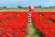 local tourists in a field of red flowers in Dali, Yunnan, China