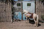 Putu Sayoga - Don Quixote of Literacy