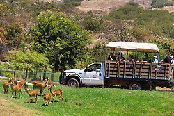 Visitors watch animals from an open truck, San Diego Zoo Safari Park, Escondido, California, United States of America