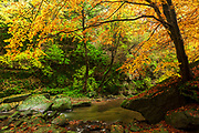 Stream across colorful autumn forest
