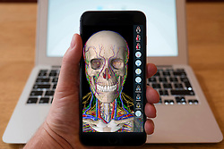 Using iPhone smartphone to display anatomy education app of human body.