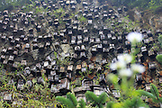 SHIYAN, CHINA - SEPTEMBER 04: (CHINA OUT) <br /> <br /> Hundreds Of Beehives Hung On Cliff To Attract Bees In Shiyan<br /> <br /> Hundreds of beehives hung on the cliff to attract bees on Guanmen Mountain in Shennongjia Forest Region on September 4, 2015 in Shiyan, Hubei Province of China.<br /> ©Exclusivepix Media