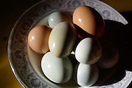 bowlful of mixed color heritage eggs