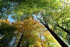 Bomen, Trees