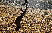 Fall Colors (photo by Gonzaga University)
