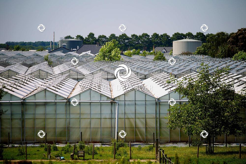 BOMMELERWAARD - In deze streek is enorm veel bedrijvigheid van Glastuinbouw. Diversen kassen staan door de hele streek met planten en bloemen. FOTO LEVIN DEN BOER - PERSFOTO.NU