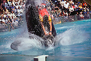 San Diego, Sea World. Killer whale ride.