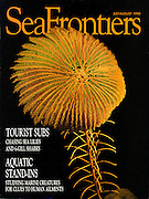A stalked crinoid photographed at 800 feet down the Cayman Wall for Sea Frontiers cover shot by photographer Courtney Platt