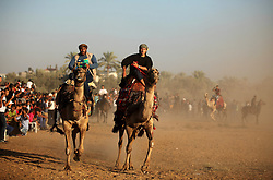 September 16, 2016 - Dair Al Balah, Gaza Strip, Palestinian Territory - Palestinians ride camels during a Bedouin festival in Dair Al Balah in the central Gaza Strip September 16, 2016  (Credit Image: © Ashraf Amra/APA Images via ZUMA Wire)
