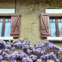 Cottage with Purple Lilacs in Annecy, France <br /> The French have a way of making most common sights absolutely delightful. A fine example is this cottage adorned by shutters flanking lace-covered windows with purple lilacs hanging on the stone walls.