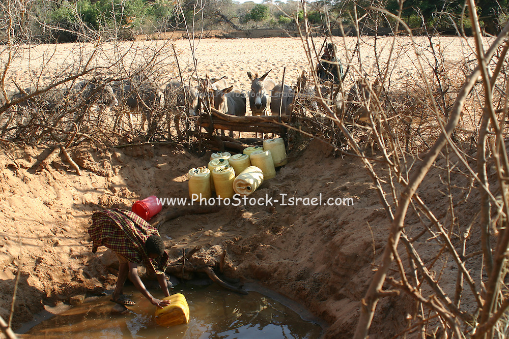 Africa, Tanzania, Lake Eyasi, Hadza men collecting water from the muddy almost dry waterhole. Hadza are a small tribe of hunter gatherers AKA Hadzabe Tribe August 2009