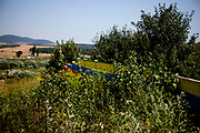 The wall in Ostrovany seen from the upper part of the settlement. During the summer vegetation the wall is almost disappearing under bushes and little trees.