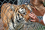 For the animals of Elmira's Wildlife Sanctuary in Wimauma, Florida, this is their last and forever home. Formerly kept as pets or in circuses - or not perfect enough for zoos, they have found a home here.