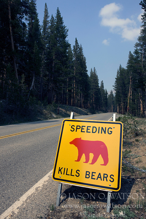"""A yellow and black road sign with a red bear pictured along Tioga Road that warns drivers that """"Speeding Kills Bears"""", Yosemite National Park, California, USA."""