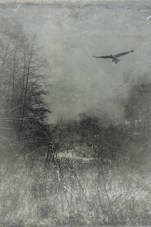 Monochrome winter scenery with bird<br /> Prints: http://society6.com/product/freedom-tbd_print#1=45