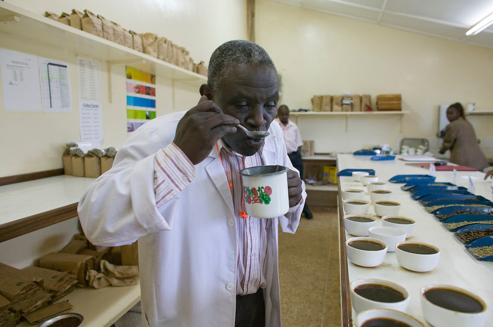Africa, Kenya, Ruira, Taste tester samples cups of freshly roasted ripe Arabica coffee   during harvest at  Socfinaf's Oakland Estates coffee plantation