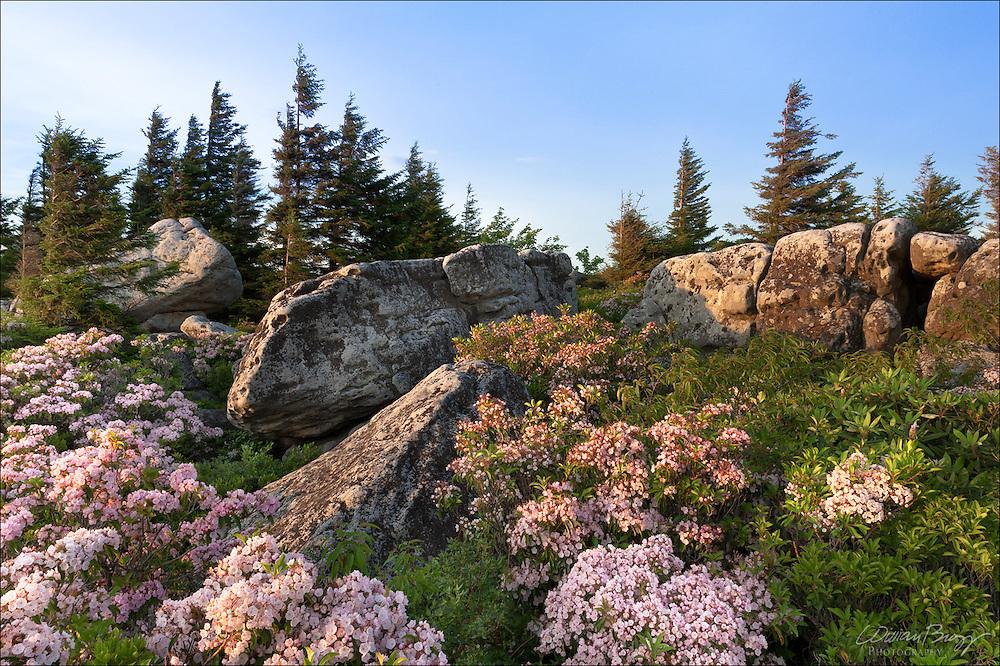 Bear Rocks - Dolly Sods, Monongahela National Forest in West Virginia.