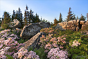 Bear Rocks - Dolly Sods, Monongahela National Forest in West Virginia.