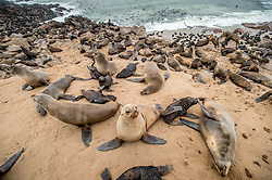 Feb. 26, 2015 - Cape Cross, Erongo, Namibia - Cape Cross, Namibia, Africa  - Cape cross seal reserve .Cape fur seals (Arctocephalus pusillus), also known as the  Brown fur seal, South African fur seal (Credit Image: © Edwin Remsberg/VW Pics via ZUMA Wire)