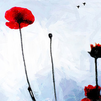 Abstract image of Red Poppies with a blue sky and daisies and crows.