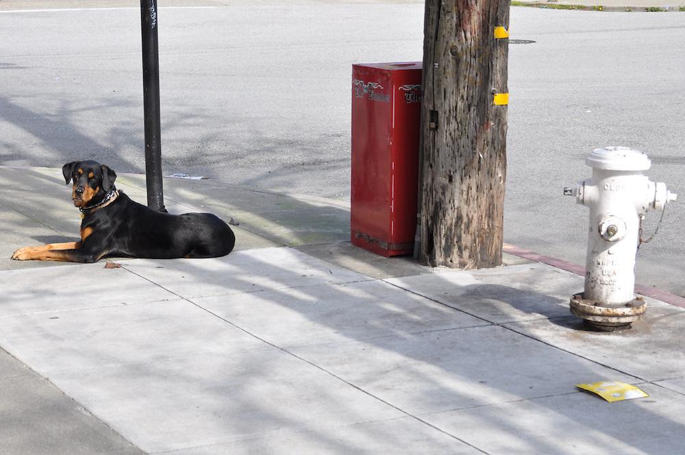 Dog &  fire hydrant
