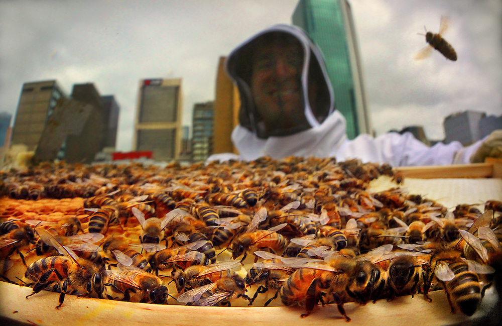 Vanessa Kwiatkowski &amp; Mat Lumalasi have a 'Rooftop Honey' business, 17 hives in the greater CBD!  Pic By Craig Sillitoe 22/02/2011 melbourne photographers, commercial photographers, industrial photographers, corporate photographer, architectural photographers, This photograph can be used for non commercial uses with attribution. Credit: Craig Sillitoe Photography / http://www.csillitoe.com<br />