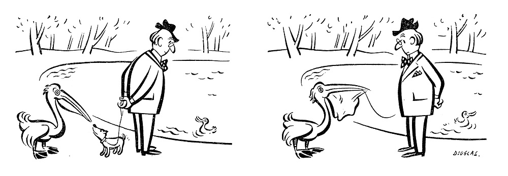 (A dog is eaten by a pelican whilst walking in the park)