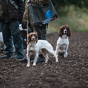 16 Dog Open Springer Spaniel Stake, Tay Valley Gundog Association, held at Broomhall Estate. 10 Oct 2017. Charlestown. Credit: Photo by Tina Norris. Copyright photograph by Tina Norris. Not to be archived and reproduced without prior permission and payment. Contact Tina on 07775 593 830 info@tinanorris.co.uk  <br /> www.tinanorris.co.uk