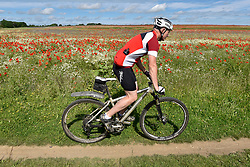 © Licensed to London News Pictures. 11/06/2017. London Colney, UK. A mountain biker passes poppies and other wildflowers which are in bloom in a field in London Colney, near St Albans.  Lying near the busy M25 motorway that encircles the capital, the flowers are putting on a spectacular show as the traffic passes by. Photo credit : Stephen Chung/LNP