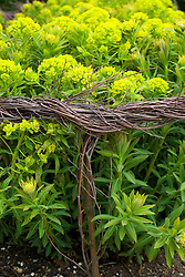 Detail of woven birch support for euphorbia