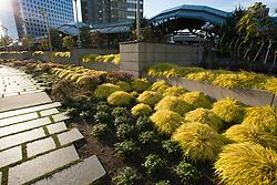 North America, United States, Washington, Bellevue, urban garden