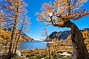 Alpine larch trees and Perfection Lake in The Enchantments, Alpine Lakes Wilderness, Washington.