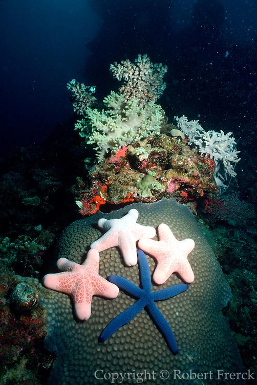 UNDERWATER MARINE LIFE WEST PACIFIC, generic reef sea stars Linckia Choriaster