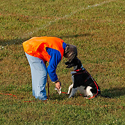 The photography was made during the 2015 Engliish Springer Spaniel Field Trial Association (ESSFTA) Tracking Test.  The event took place, Wednesday, September 20th, at Purina Farms, in Gray Summit, MO.