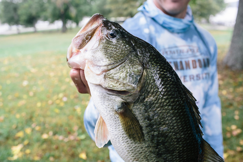 Thomas Arens of Shenandoah University shows off the largest bass they caught on Saturday during the FLW College Fishing Northern Conference Invitational in Marbury, MD on Oct. 11, 2014. Only the top 15 of 43 teams moved on to Sunday.