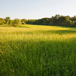 A hay field at Raspberry Farm in Hampton Falls, New Hampshire.