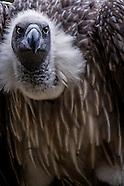 birds - Africa