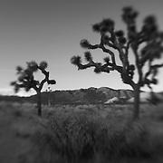 Joshua Tree Red Mountains At Dusk - Lensbaby - Black & White